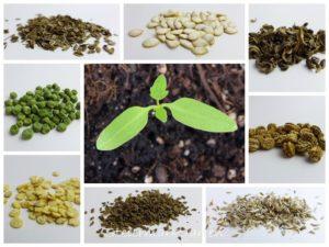 Pflanzen selbst aus Samen ziehen – Die ultimative Checkliste