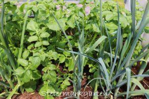 Fruchtfolge, Fruchtwechsel und Co. für gesundes Pflanzenwachstum