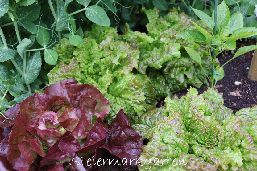 Mischkultur – Welche Gemüse- und Kräutersorten sich gut riechen können