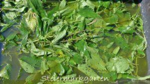 Gratis Bio Pflanzendünger: Brennnesseljauche