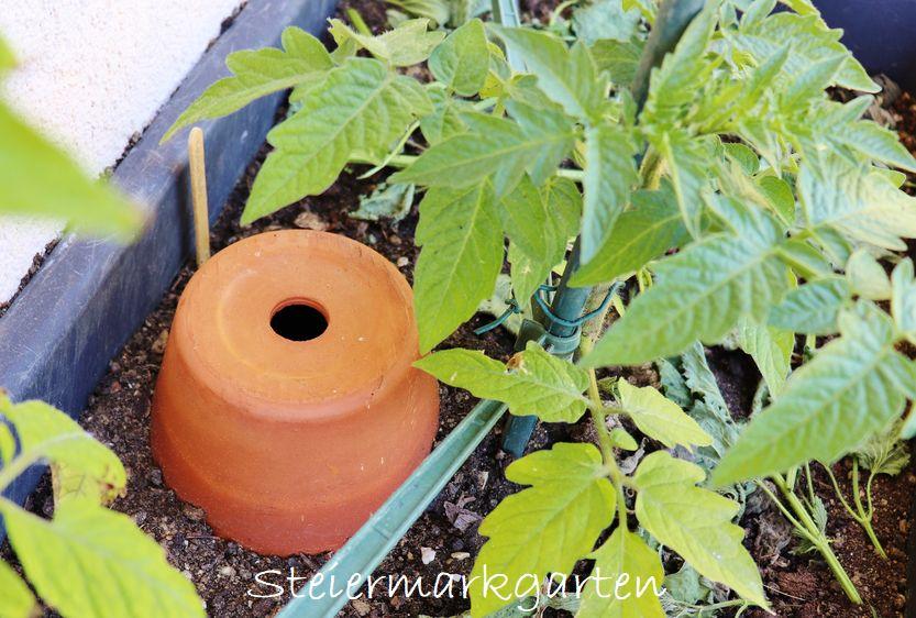 Weniger gießen dank DIY Bewässerung