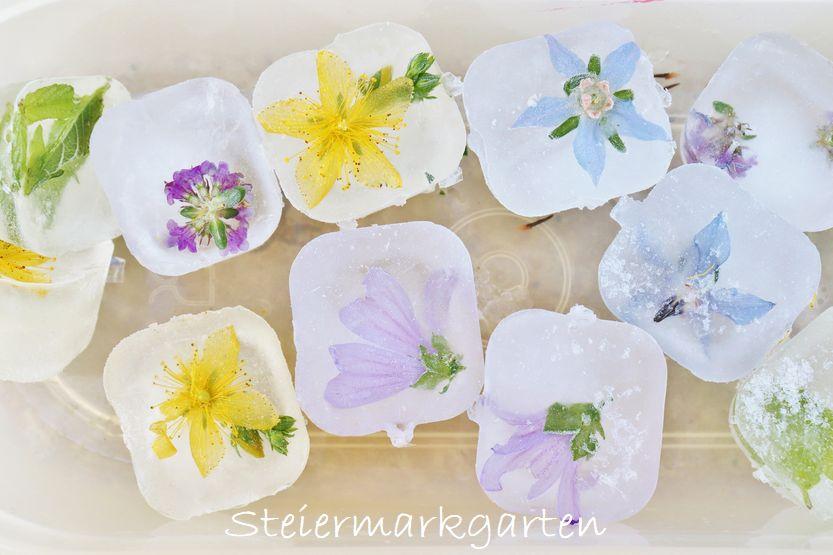 Blüten-, Kräuter-, Beeren-Eiswürfel DIY