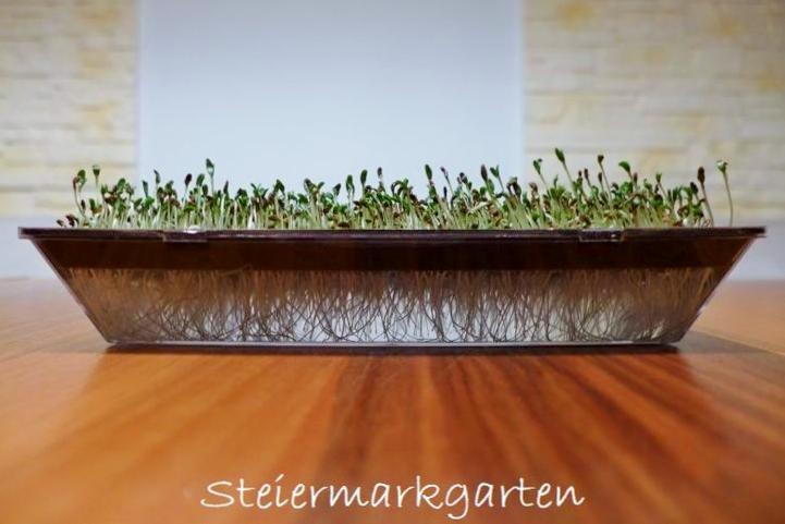 Alfalfasprossen-Steiermarkgarten