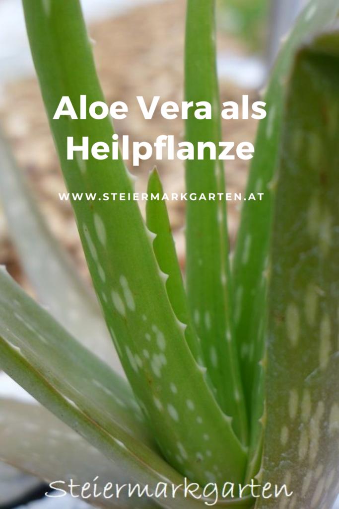 Aloe-Vera-als-Heilpflanze-Pin-Steiermarkgarten