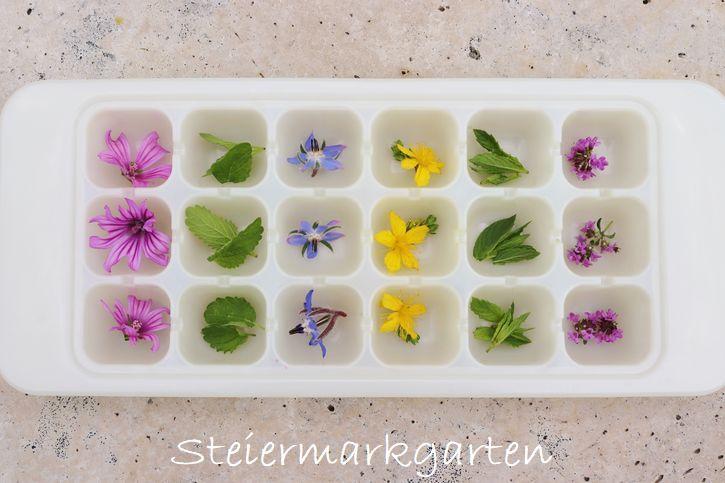 Blüten-Kräutereiswürfel-DIY-Steiermarkgarten