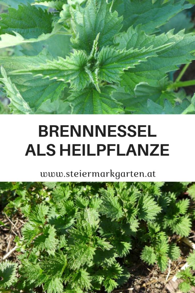 Brennnessel-Heilpflanze-Pin-Steiermarkgarten