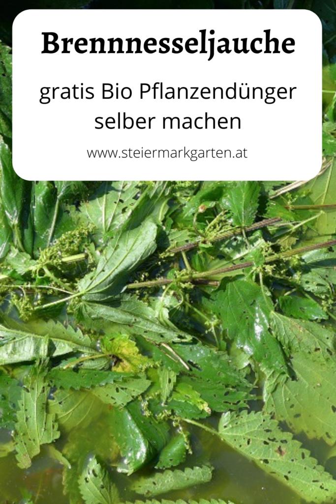 Brennnesseljauch-Duenger-DIY-Pin-Steiermarkgarten