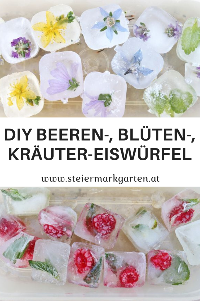 DIY-Beeren-Blueten-Kraeuter-Eiswuerfel-Pin-Steiermarkgarten