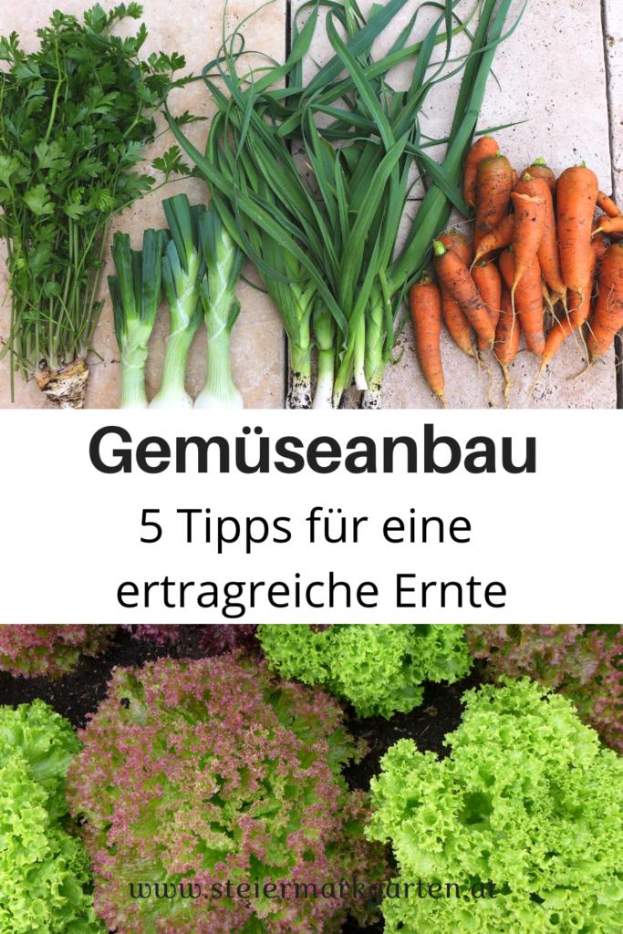 Gemueseanbau-Tipps-ertragreiche-Ernte-Pin-Steiermarkgarten