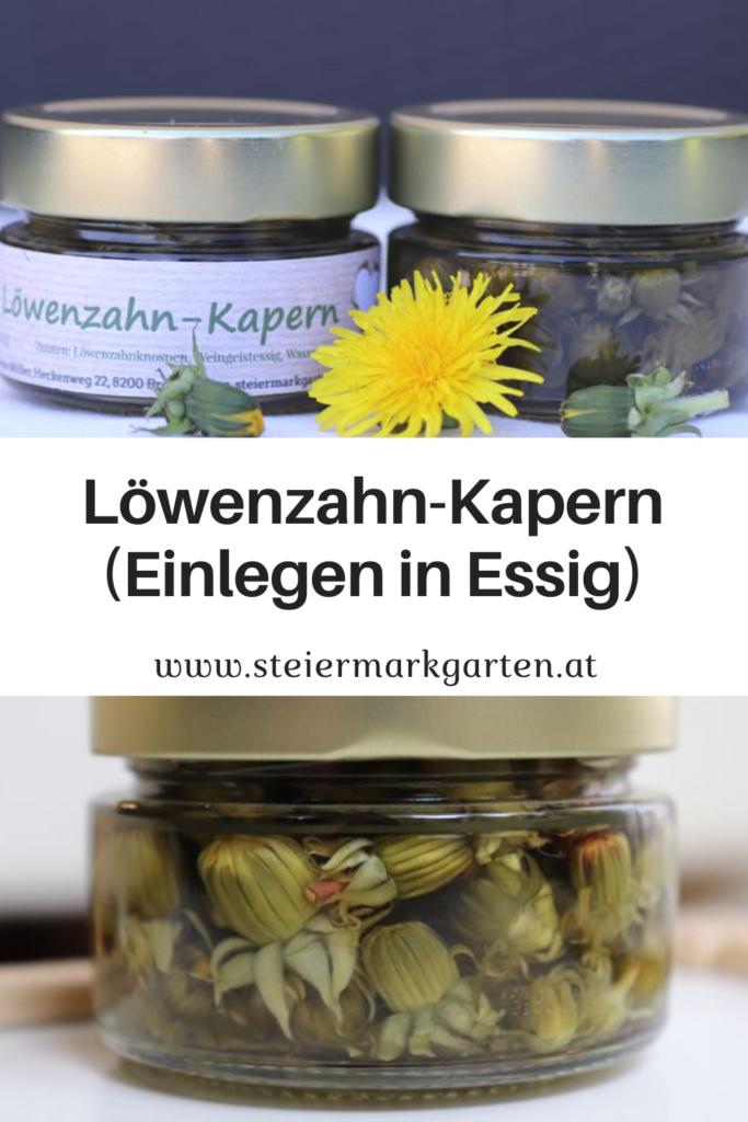 Loewenzahn-Kapern-Einlegen-in-Essig-Pin-Steiermarkgarten