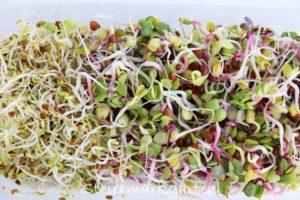 Sprossen ziehen – Vitaminkick im Winter
