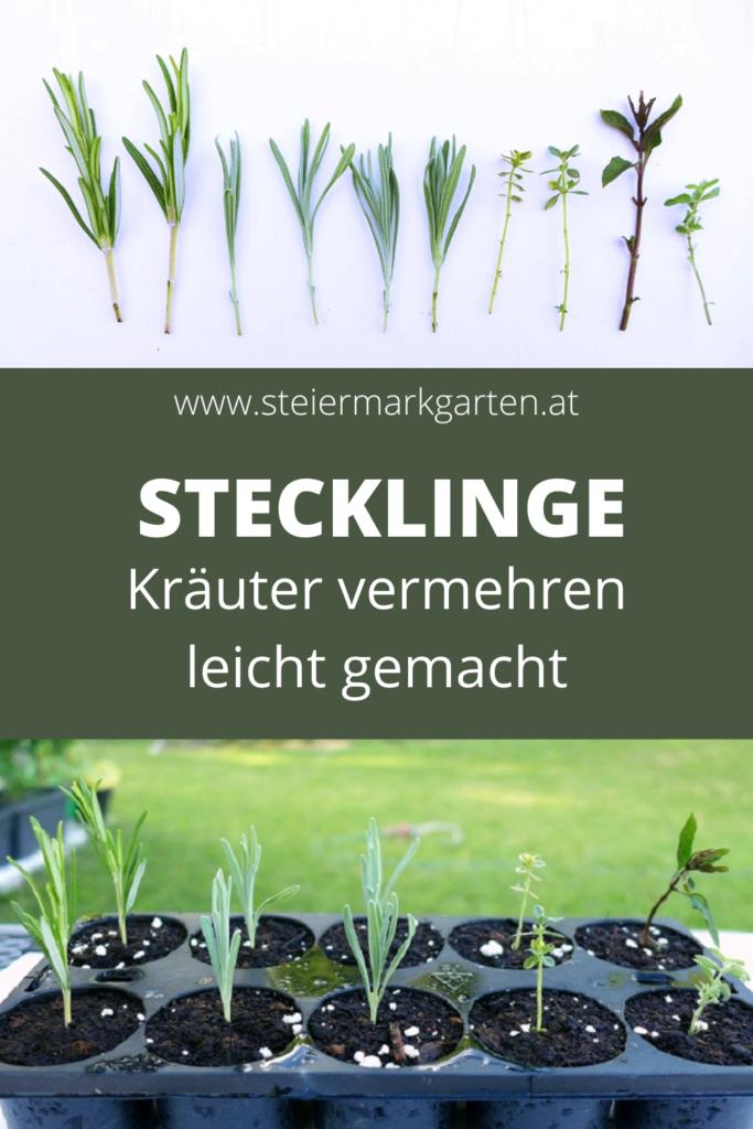 Stecklinge-Kraeuter-vermehren-Pin-Steiermarkgarten