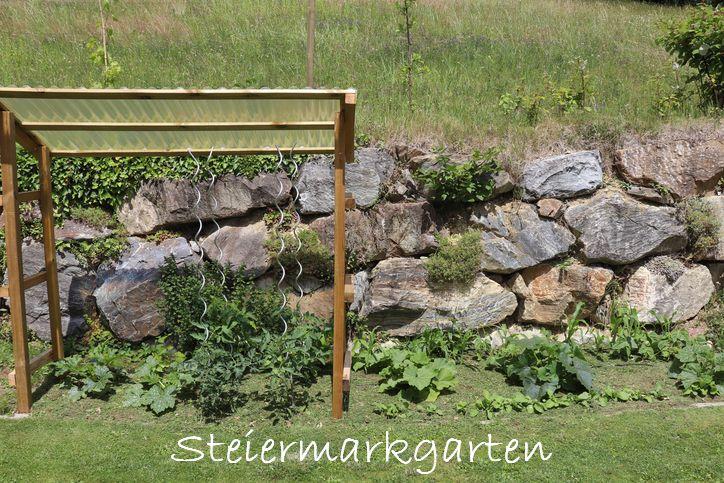 Grünschnitt bzw. Rasenschnitt ist perfekt zum Mulchen im Gemüsebeet geeignet