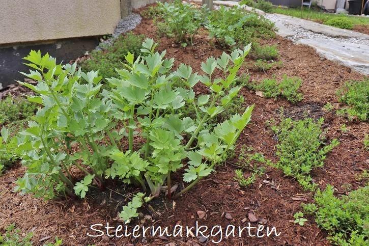 Gartenfaser ist das passende Mulchmaterial für alle Gartenbereiche, sogar in Hanglage