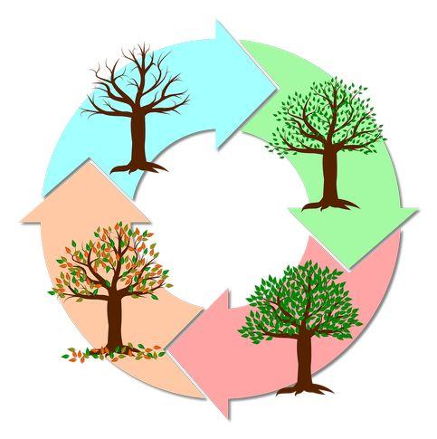 Prinzip von Mulchen: natürlicher Prozess aus der Natur