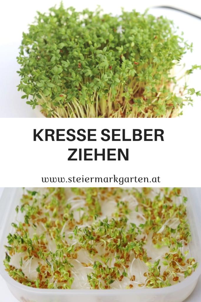 Kresse-selber-ziehen-Pin-Steiermarkgarten