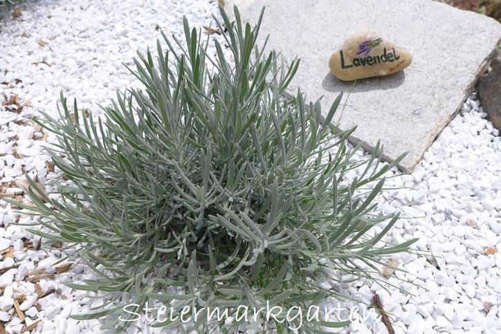 Mineralisches Material wie Steine, Kies und Schotter ist das passende Mulchmaterial für Steingärten und mediterrane Pflanzen