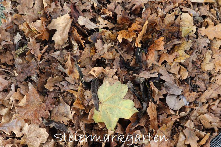 Laub ist das passende Mulchmaterial zum Mischen mit grünem Mulchmaterial, um das C:N-Verhältnis zu verbessern