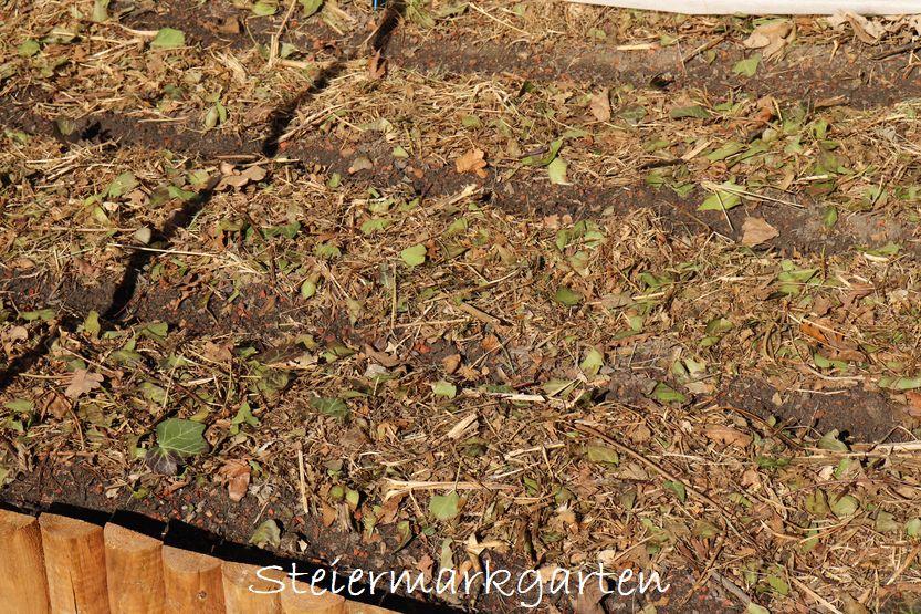 Bio Schwarzerde von Sonnenerde mulchen im Gemüsebeet