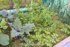 Gemüsebeet richtig mulchen