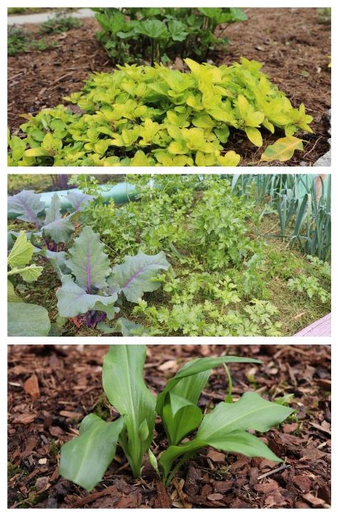Mulchen bietet viele Vorteile: weniger gießen, weniger düngen, weniger Unkraut zupfen