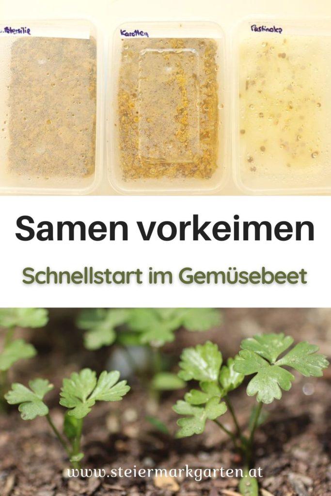 Samen vorkeimen für den Schnellstart im Gemüsebeet Pin