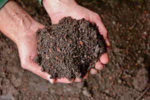 Mit Bio Schwarzerde zum fruchtbaren Boden | Kooperation