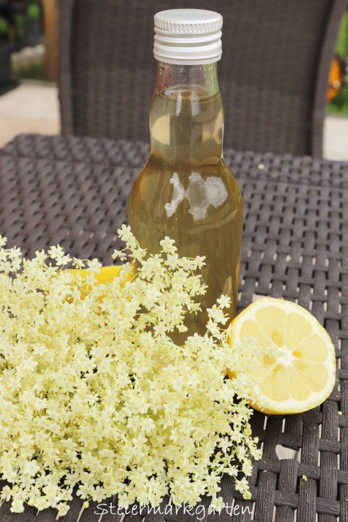Holunderblütensirup selber machen Rezept