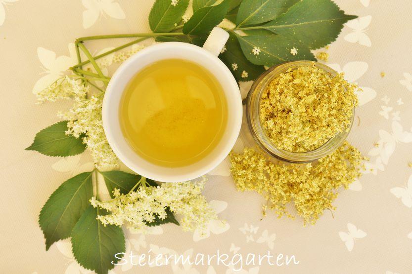 Holunderblüten trocknen – gesunder, aromatischer Tee